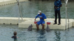 swim with the dolphins 016