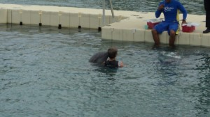 swim with the dolphins 018