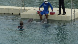 swim with the dolphins 019