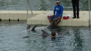 swim with the dolphins 021