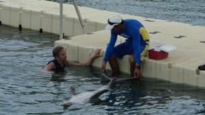 swim with the dolphins 033
